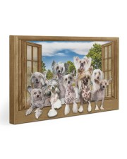 Chinese crested 30x20 Gallery Wrapped Canvas Prints front