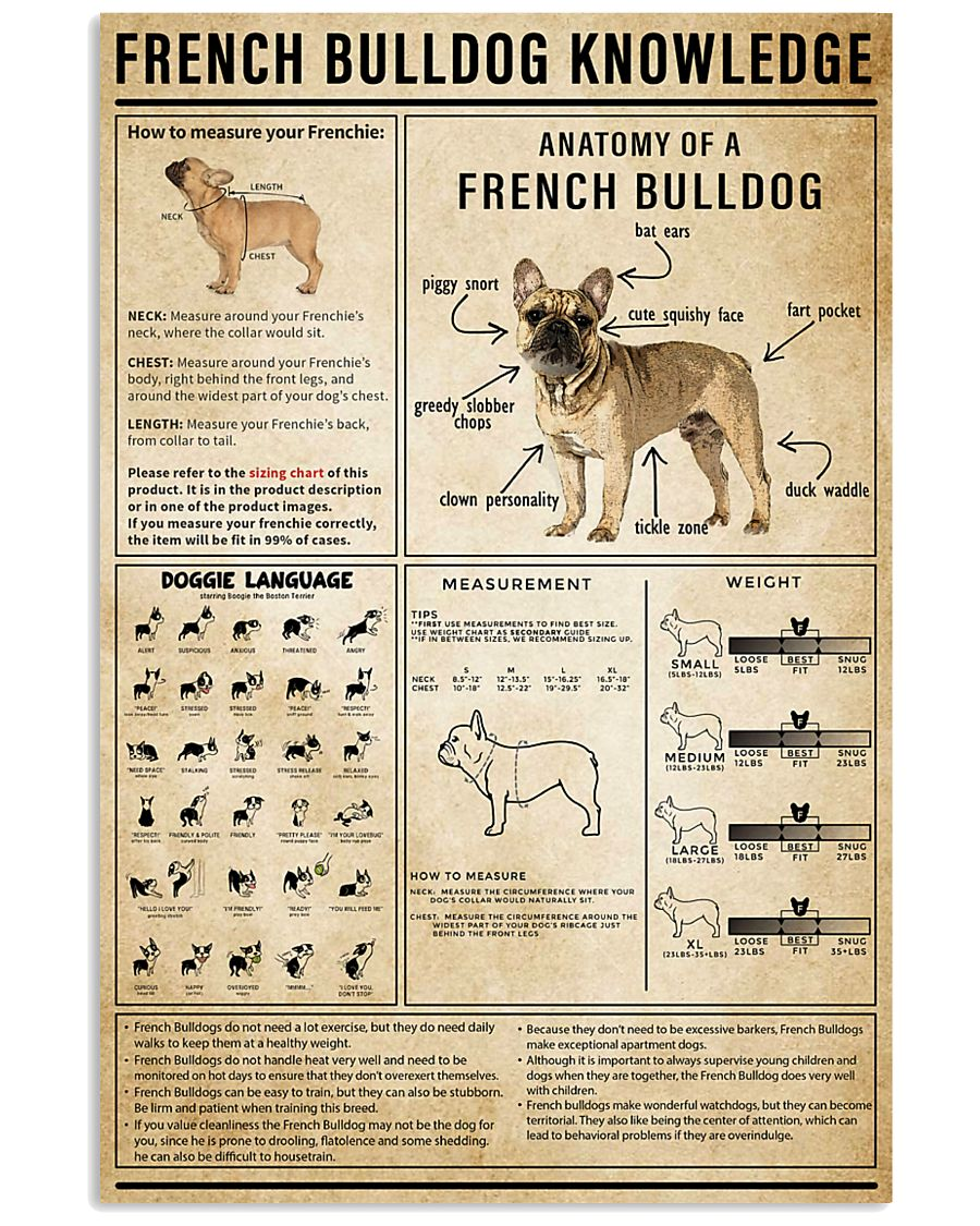 French Bulldog Knowledge 11x17 Poster