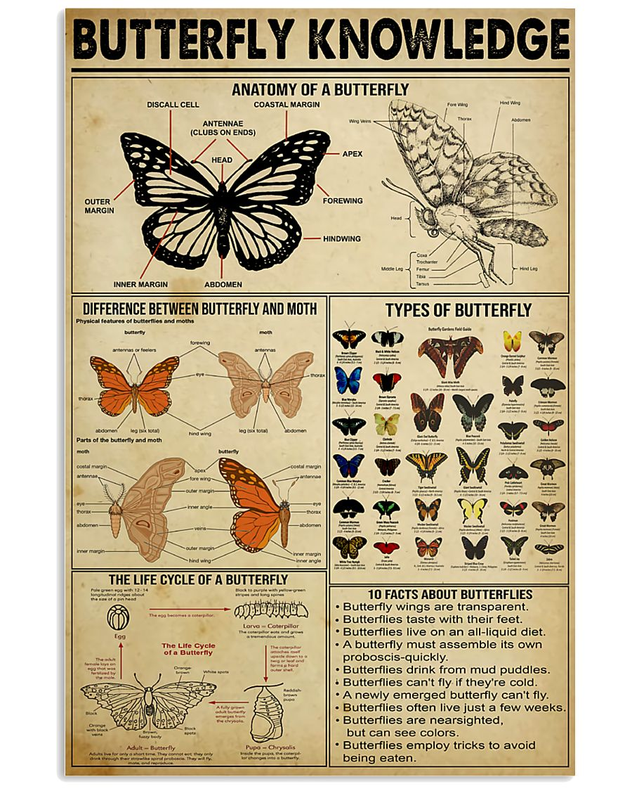 Butterfly Knowledge 11x17 Poster