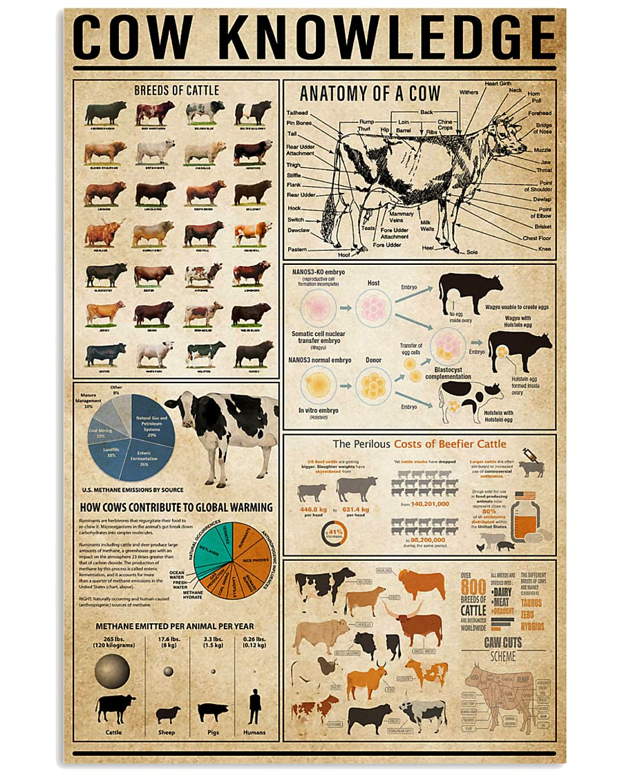 Cow Knowledge 11x17 Poster
