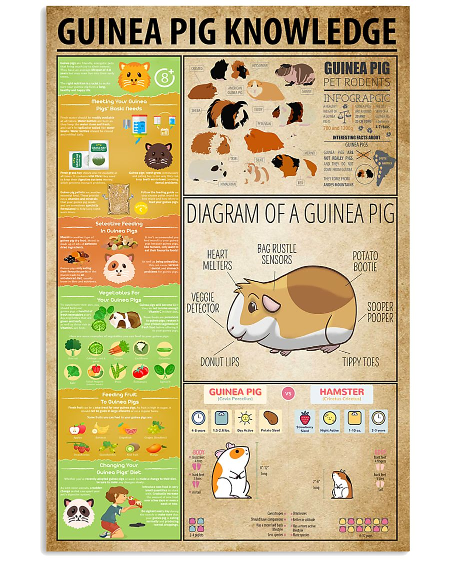 Guinea Pig Knowledge 11x17 Poster
