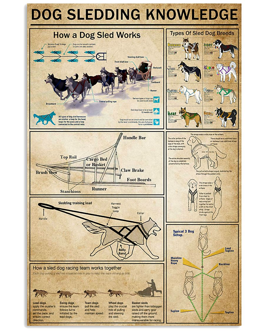 Dog Sledding Knowledge 11x17 Poster
