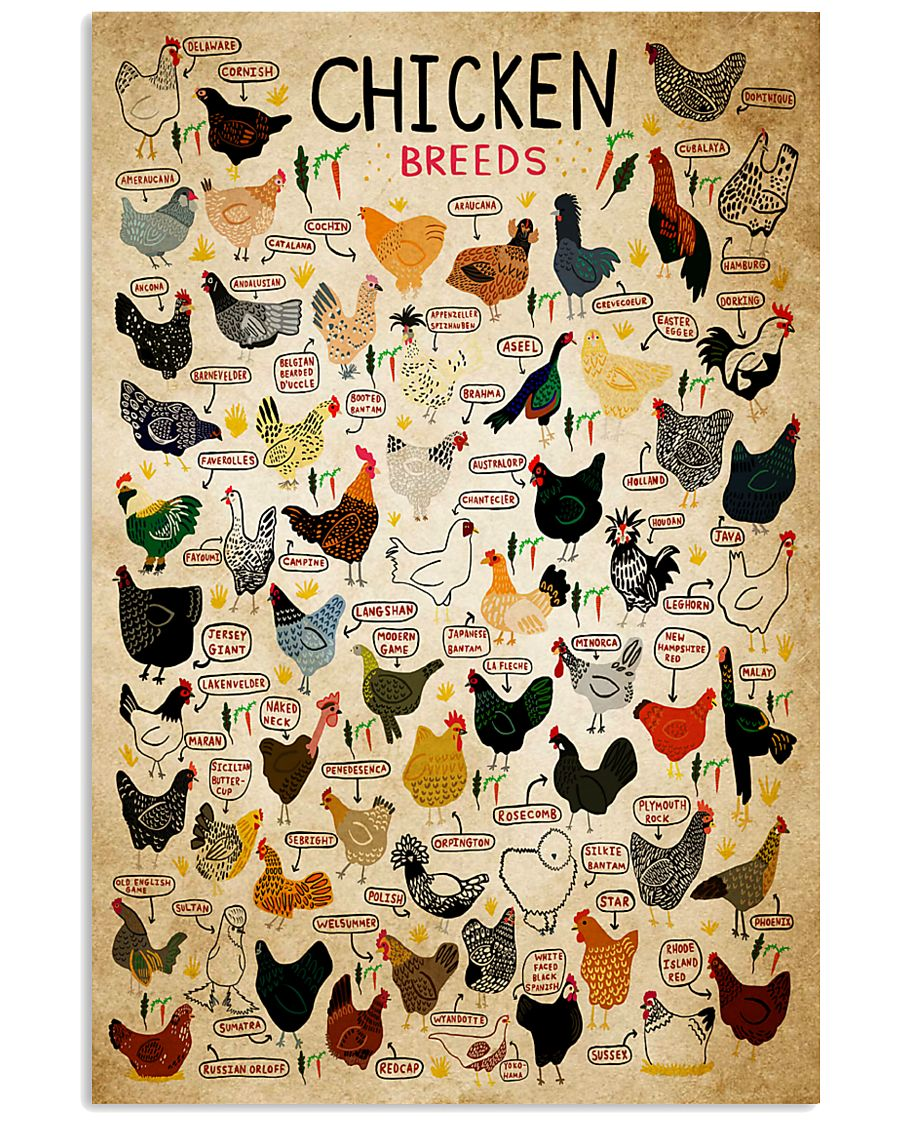 Chicken Breeds 11x17 Poster