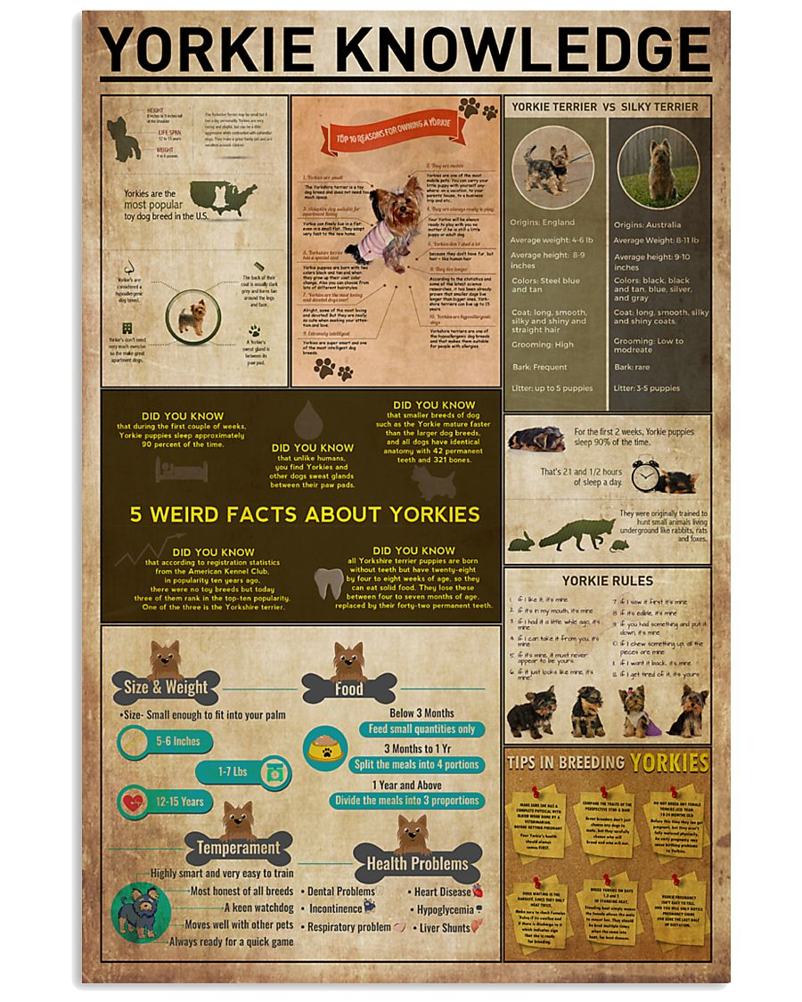 Yorkie Knowledge 11x17 Poster