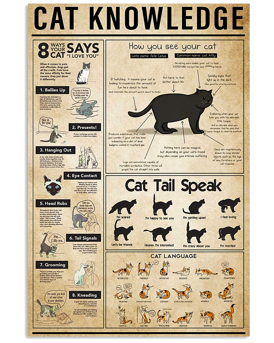Cat Knowledge 11x17 Poster