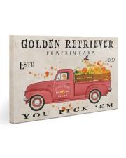 golden retriever pumpkin farm Gallery Wrapped Canvas Prints tile