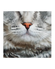 Orange nose cat Cloth face mask aos-face-mask-coverlet-lifestyle-front-02