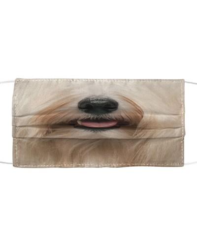 Havanese dog face
