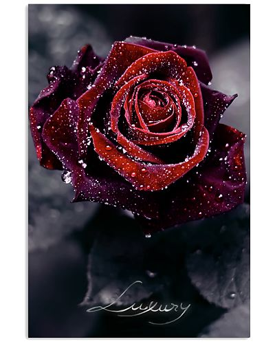 Luxury Rose
