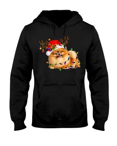 Pomeranian 18