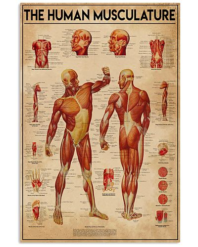 Massage therapist The Human Musculature
