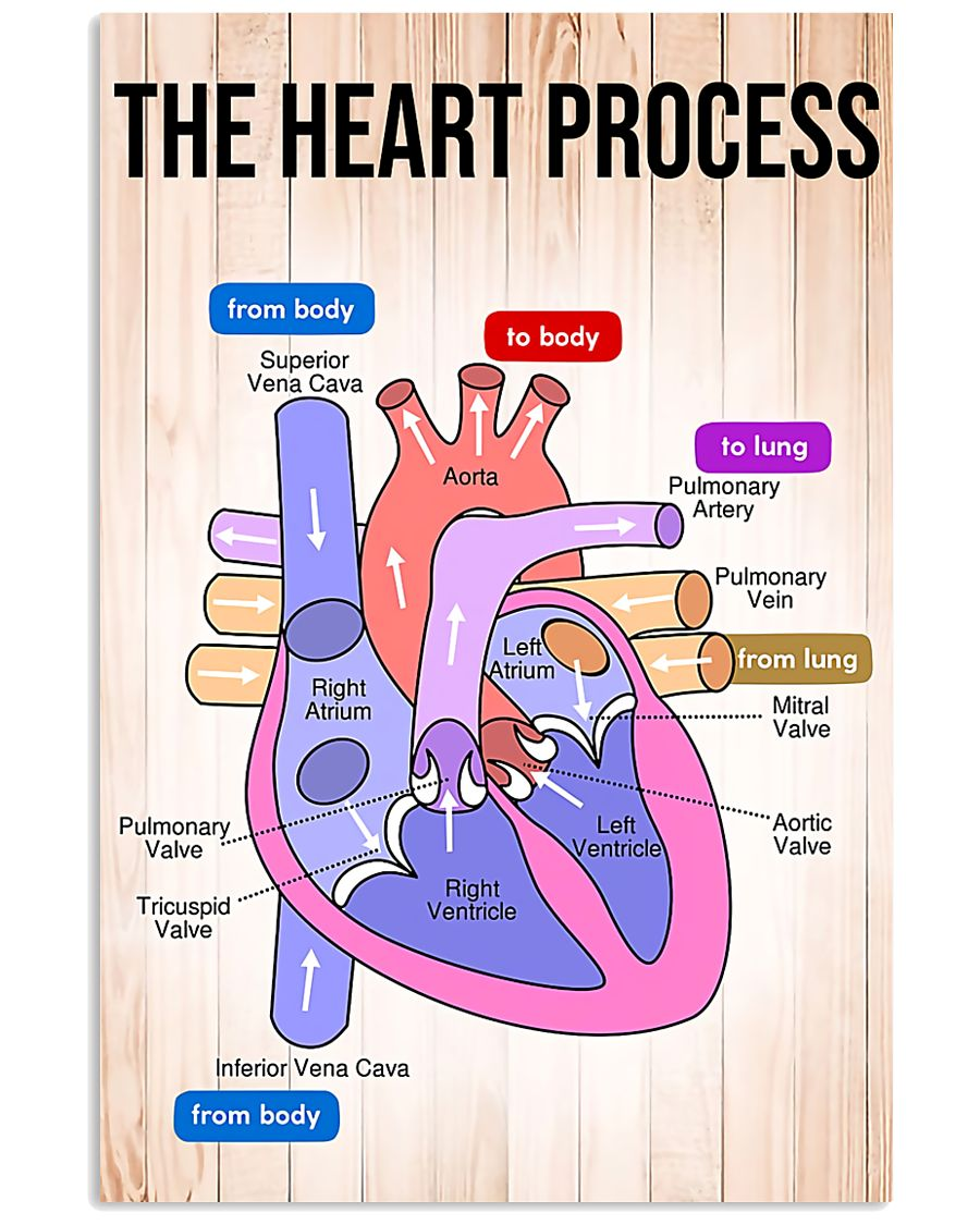 Paramedic The Heart Process 11x17 Poster