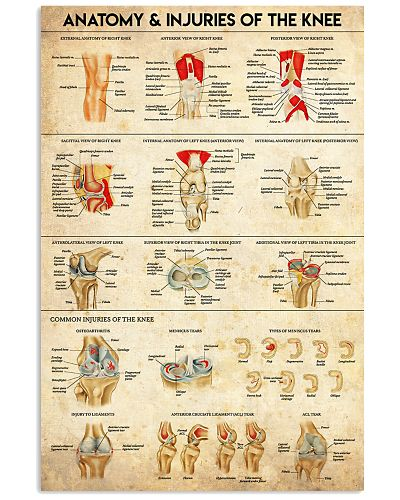 Physical Therapy Anatomy And Injuries Of The Knee
