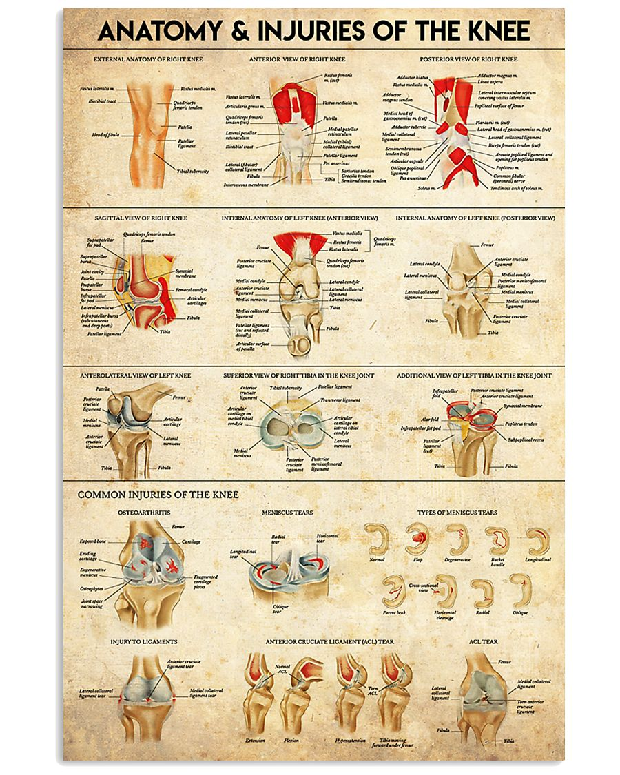 Physical Therapy Anatomy And Injuries Of The Knee 11x17 Poster