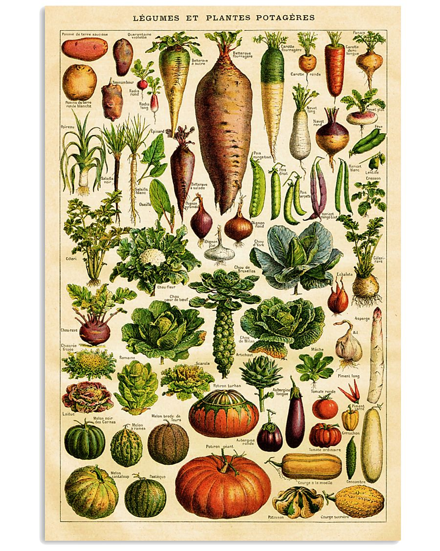 Dietitian Vegetables  11x17 Poster