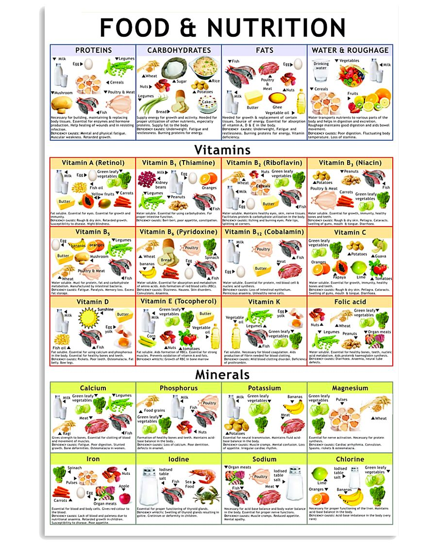 Dietitian Nutritionist Food And Nutrition 16x24 Poster