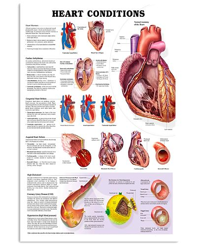 Heart Condition Educational Cardiologist