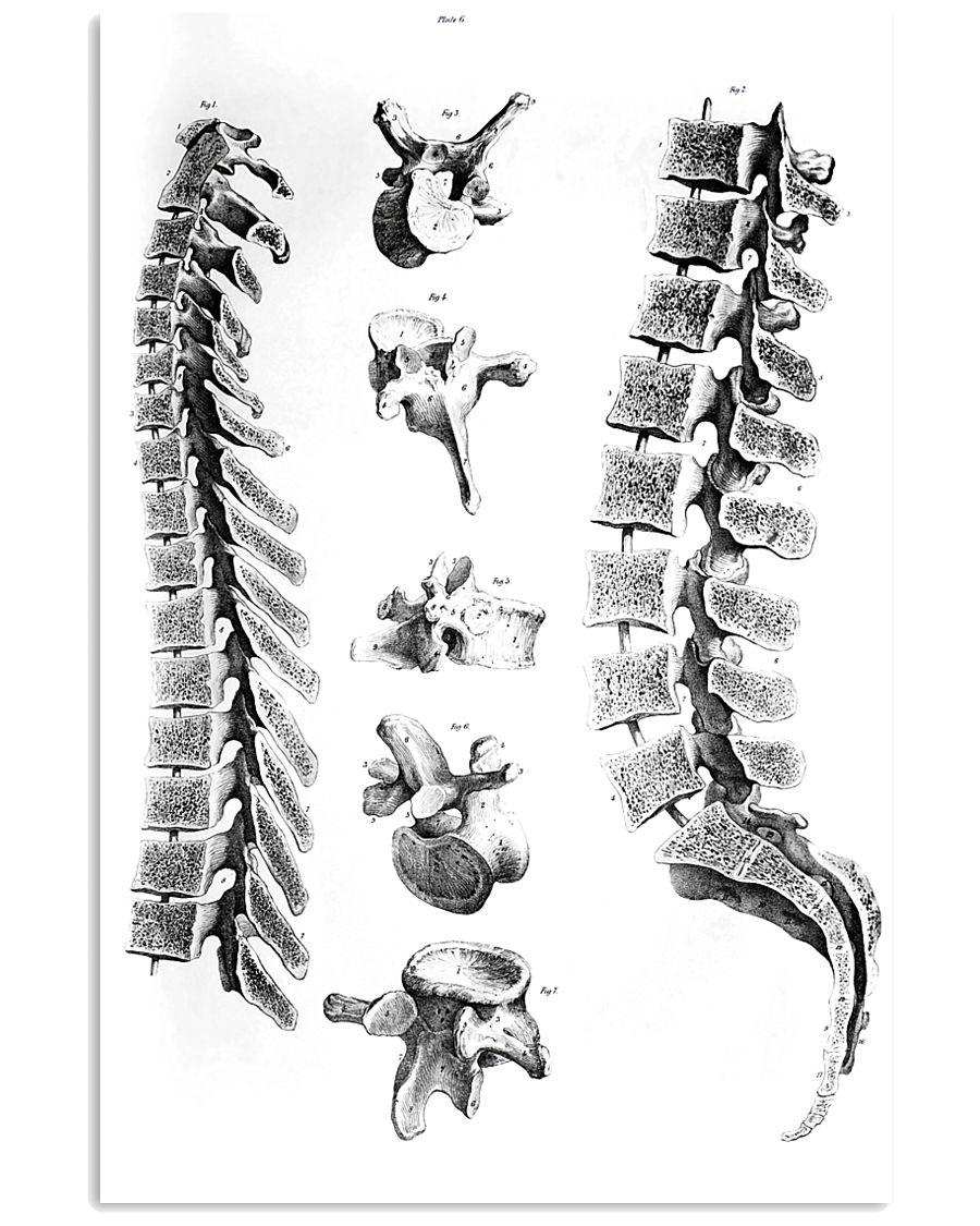 Chiropractor anatomy 11x17 Poster