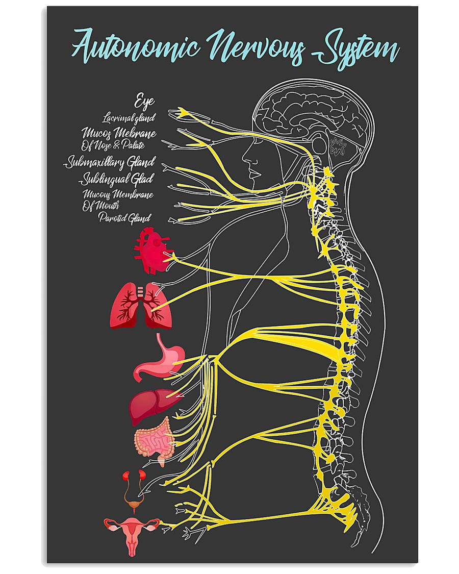 Massage Therapist Autonomic Nervous System 24x36 Poster