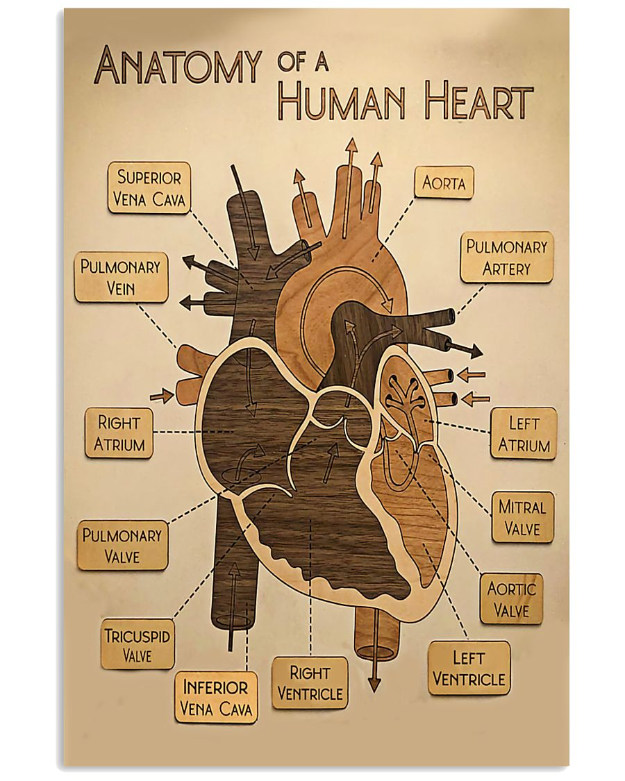 Paramedic Anatomy Of A Human Heart 11x17 Poster