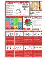 ECG Waveform Cardiologist 11x17 Poster front