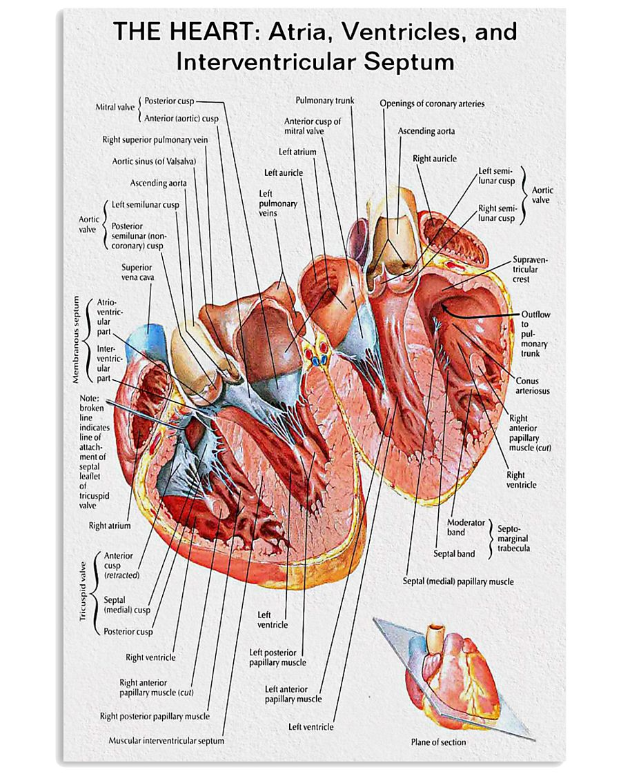 The Heart Knowlege Cardiologist 11x17 Poster
