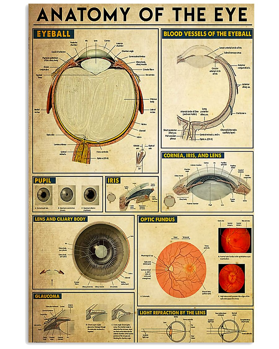 Optometrist Anatomy Of The Eye 11x17 Poster