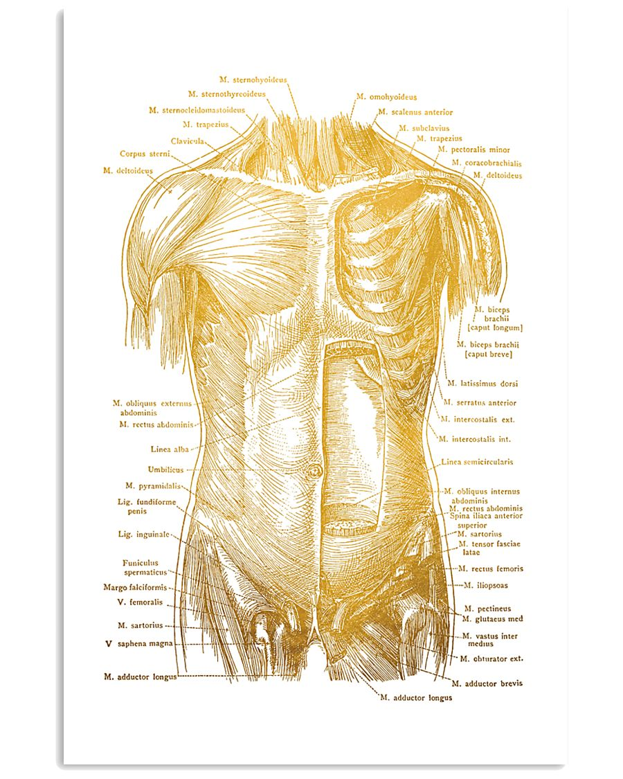 Massage Therapist Muscles Of The Trunk 11x17 Poster