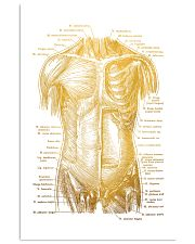 Massage Therapist Muscles Of The Trunk 11x17 Poster front
