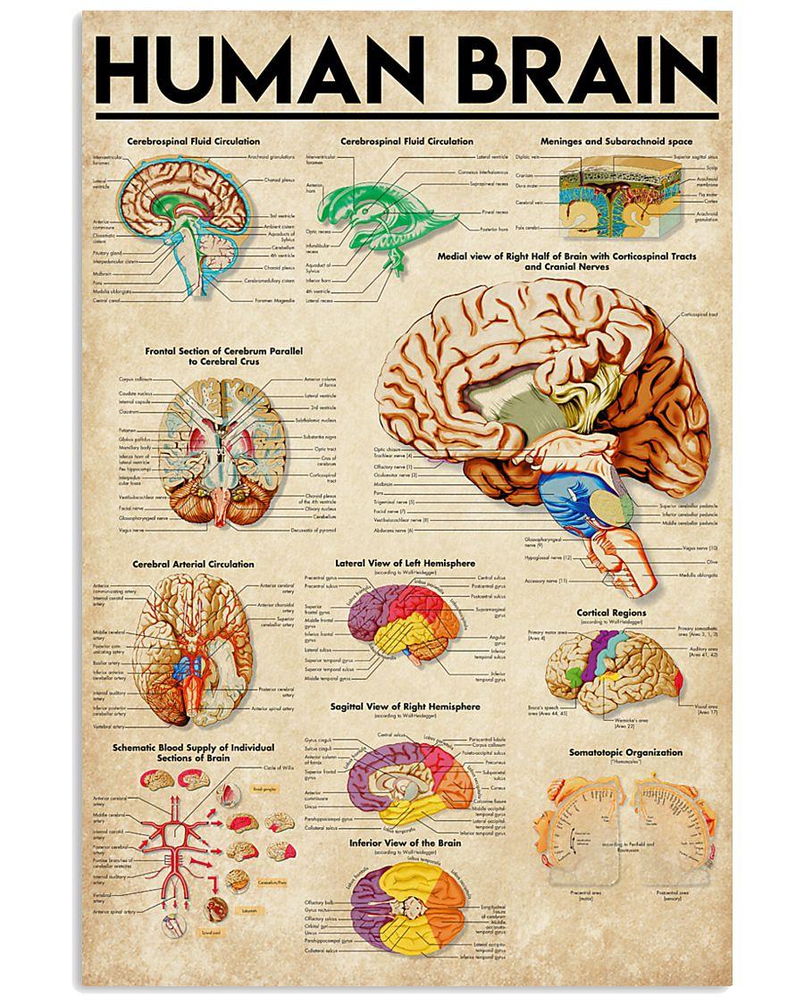 Paramedic Human Brain 11x17 Poster
