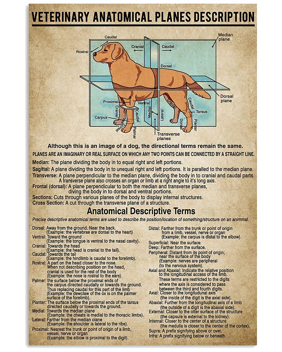 Veterinary Anatomical Planes Description 11x17 Poster