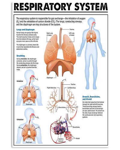 Respiratory Therapist Respiratory System