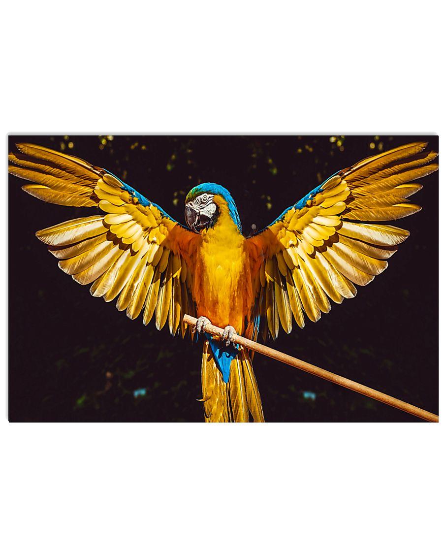 Beautiful Parrot  24x16 Poster