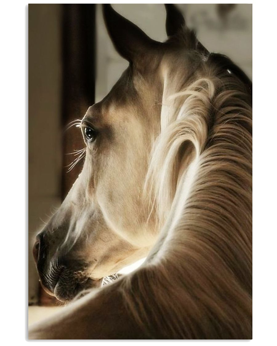 horse poster BG 16x24 Poster