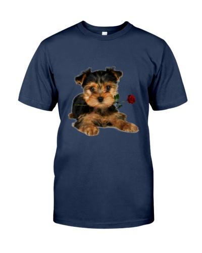 Yorkshire Terrier Rose