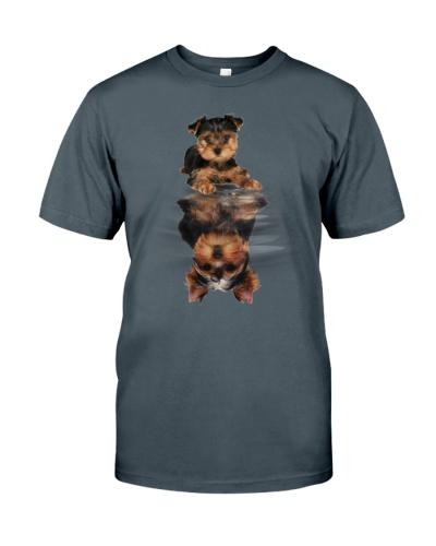 Yorkshire Terrier In Dream