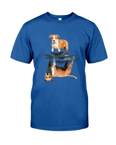 American Staffordshire Terrier Drem