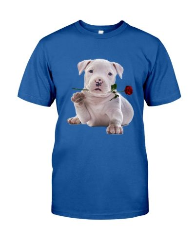 American Staffordshire Terrier Rose