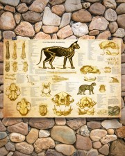 Veterinarian cat skeleton anatomy pt mttn-nth 24x16 Poster aos-poster-landscape-24x16-lifestyle-16
