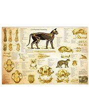 Veterinarian cat skeleton anatomy pt mttn-nth 24x16 Poster front
