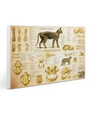 Veterinarian cat skeleton anatomy pt mttn-nth Gallery Wrapped Canvas Prints tile