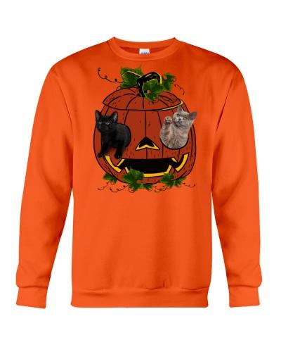 Cat - Halloween in pumpkin