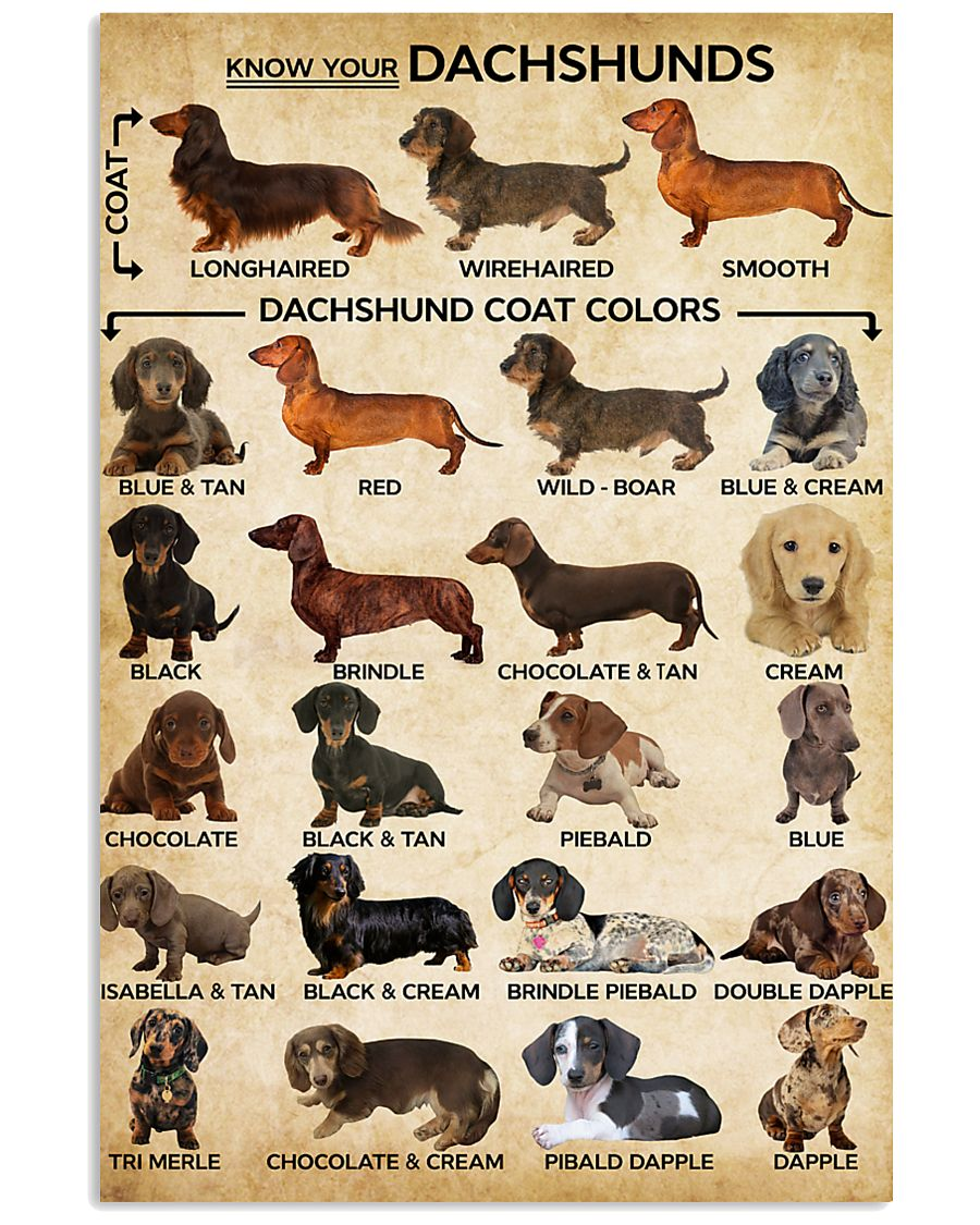 Dachshund Type Of Dogs Poster 11x17 Poster