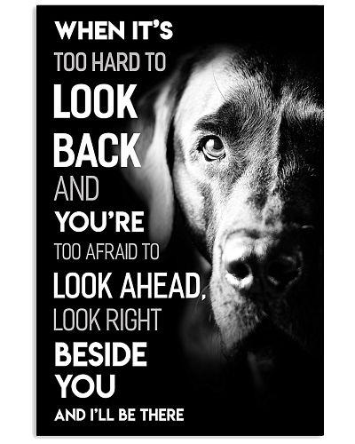 Dog Labrador Look Ahead