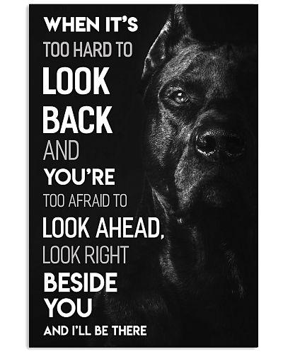 Dog Bull Look Ahead