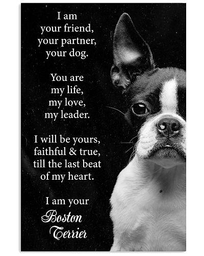Dog Boston I Am Your Friend