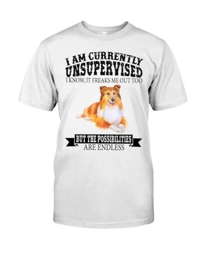 HH Dog Sheltie Unsupervised