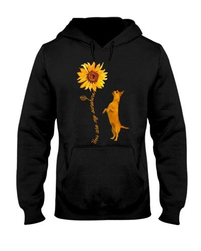 Chihuahua You Are My Sunshine