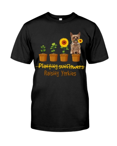 Yorkshire Terrier Planting Sunflowers