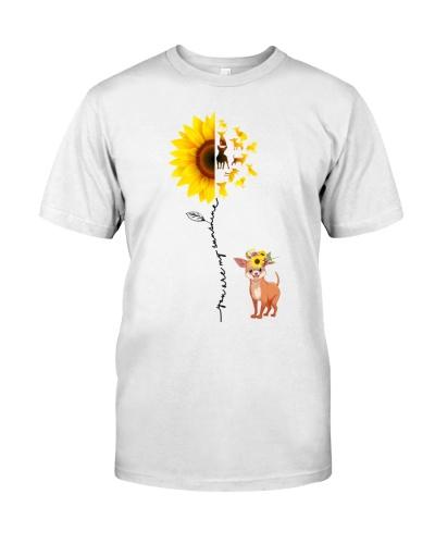 Chihuahua Sunshine
